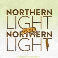 Northern Light x Northern Light